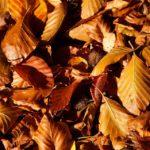 Gezond de herfst door